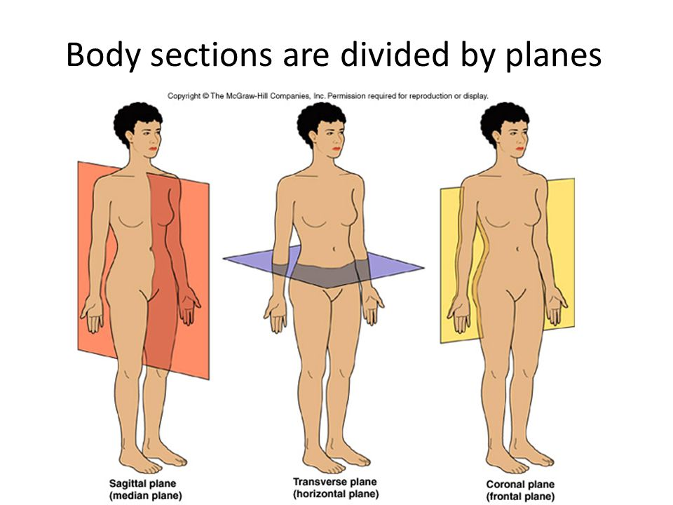 Body sections are divided by planes