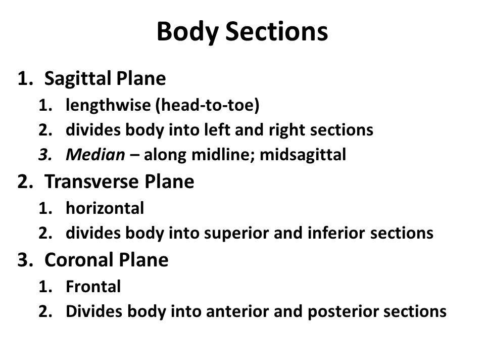 Body Sections Sagittal Plane Transverse Plane Coronal Plane