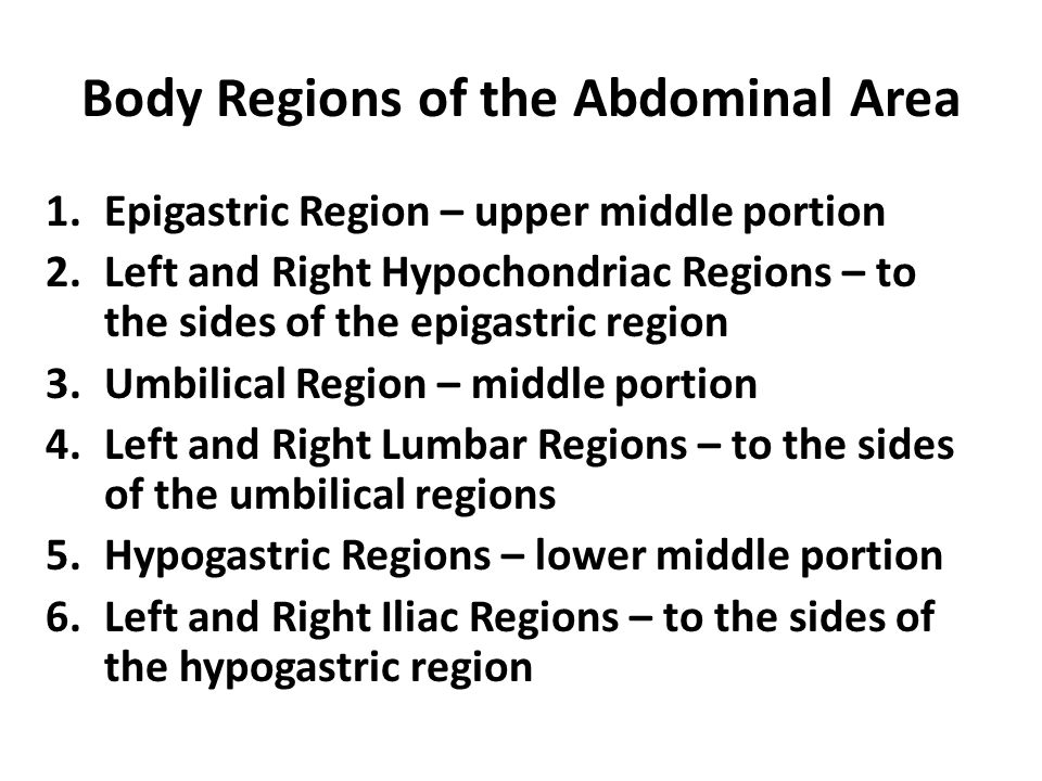 Body Regions of the Abdominal Area