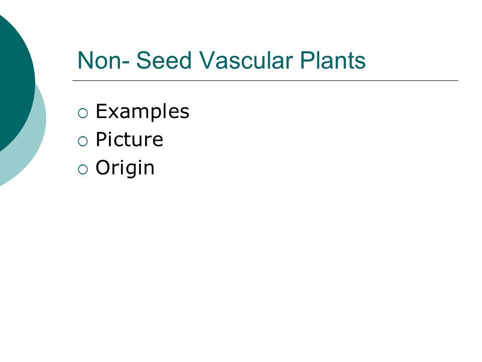 Non- Seed Vascular Plants