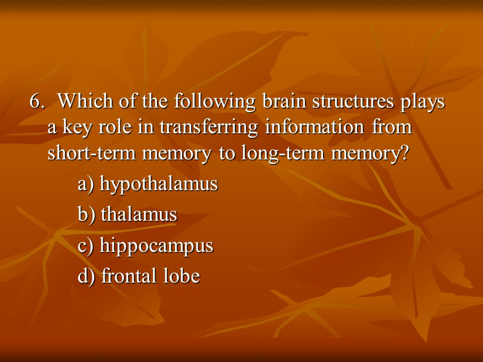 6. Which of the following brain structures plays a key role in transferring information from short-term memory to long-term memory