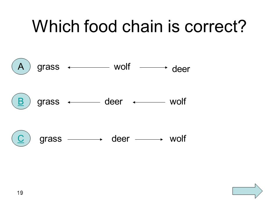 Which food chain is correct