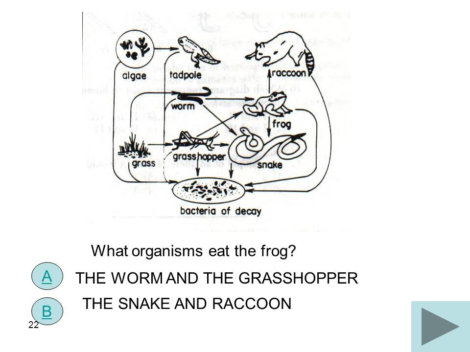 What organisms eat the frog