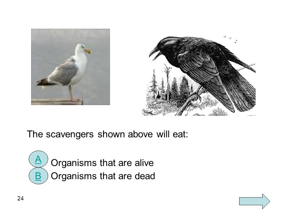 The scavengers shown above will eat: