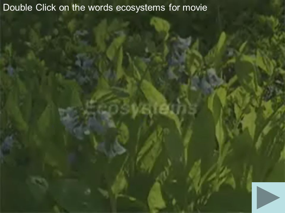 Double Click on the words ecosystems for movie