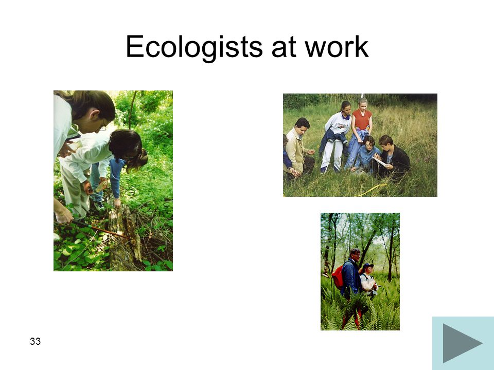 Ecologists at work