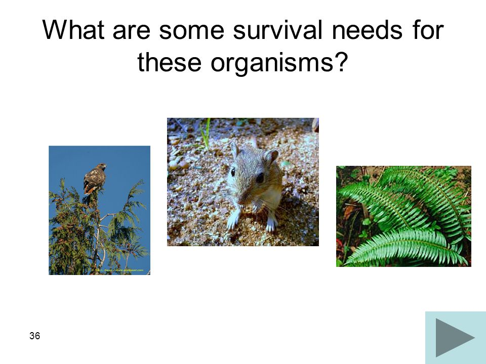 What are some survival needs for these organisms