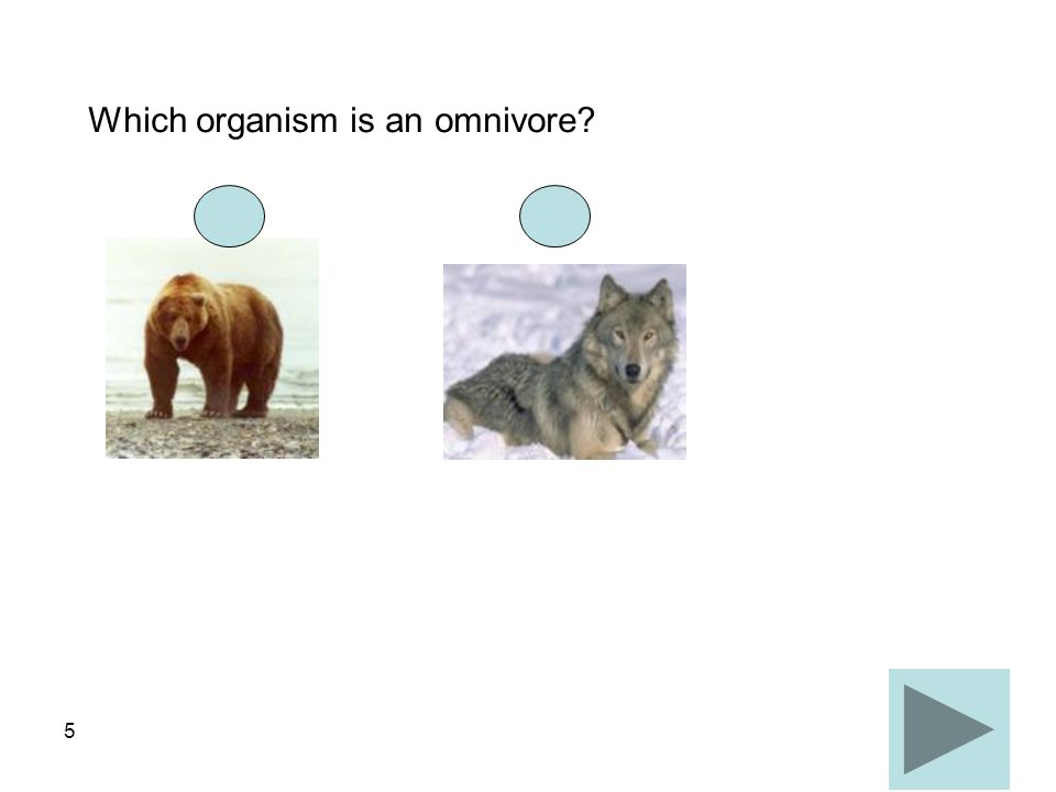 Which organism is an omnivore