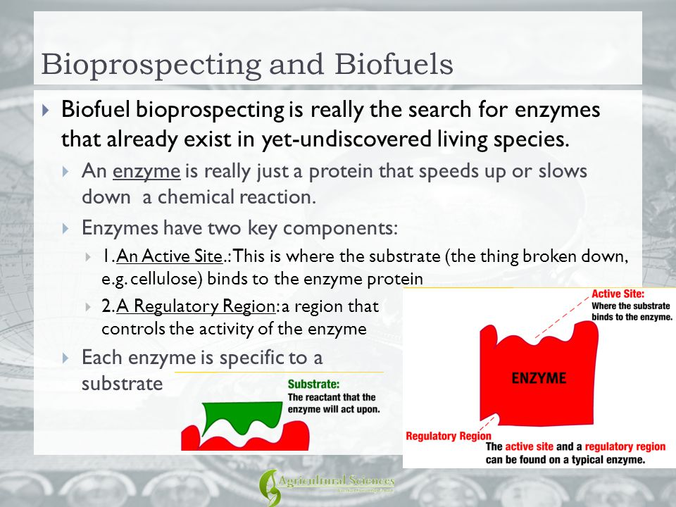 Bioprospecting and Biofuels