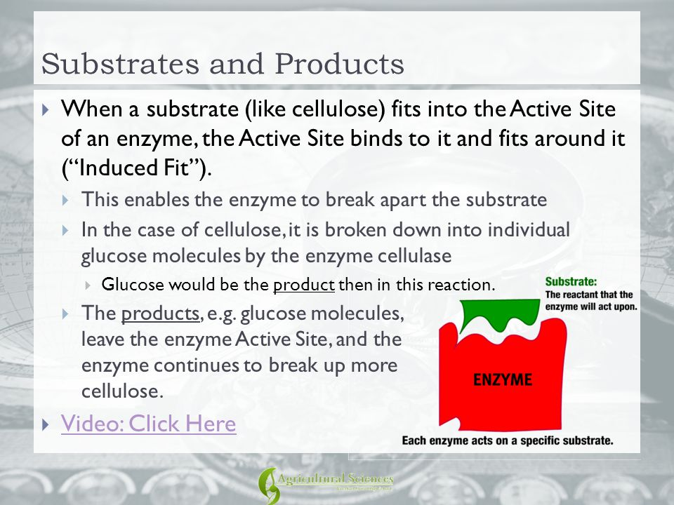 Substrates and Products