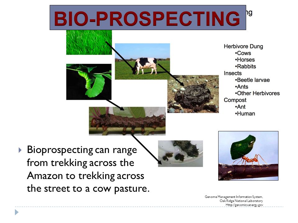 BIO-PROSPECTING Bioprospecting can range from trekking across the Amazon to trekking across the street to a cow pasture.