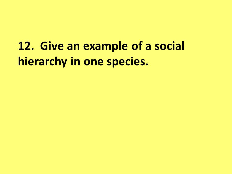 12. Give an example of a social hierarchy in one species.