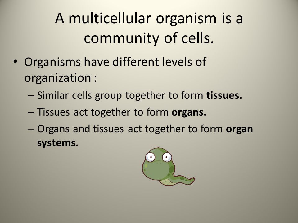 A multicellular organism is a community of cells.