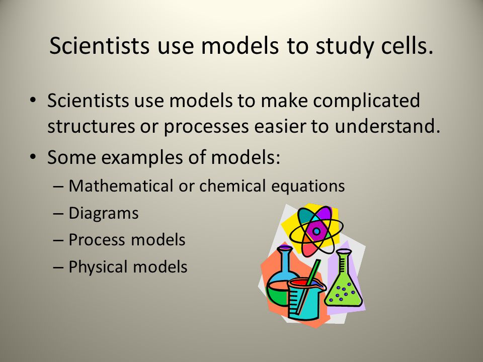 Scientists use models to study cells.