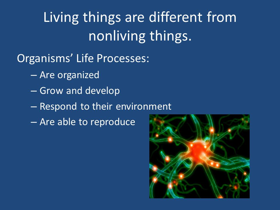 Living things are different from nonliving things.