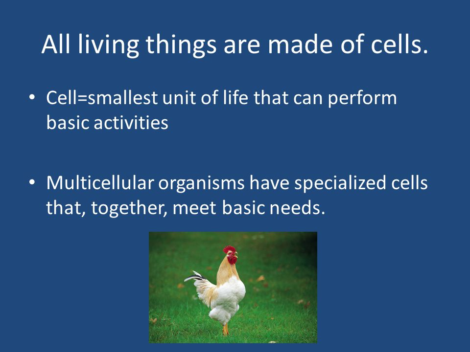 All living things are made of cells.