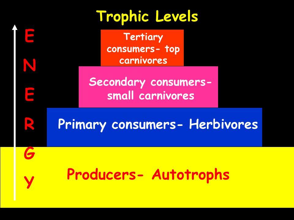 E N R G Y Trophic Levels Producers- Autotrophs