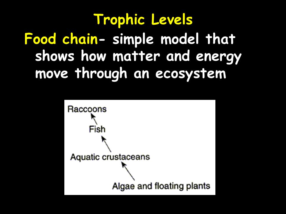 Trophic Levels Food chain- simple model that shows how matter and energy move through an ecosystem