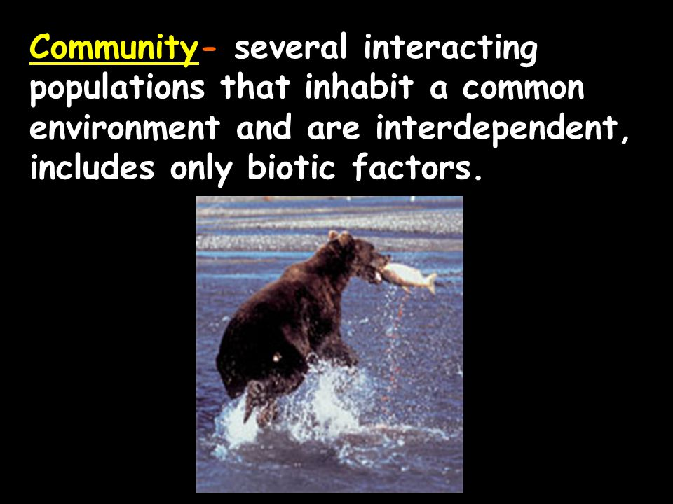 Community- several interacting populations that inhabit a common environment and are interdependent, includes only biotic factors.
