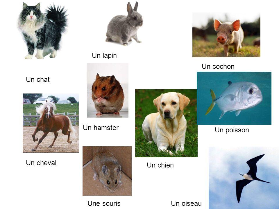 Un lapin Un cochon Un chat Un hamster Un poisson Un cheval Un chien Une souris Un oiseau