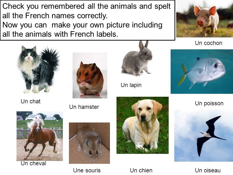 Check you remembered all the animals and spelt all the French names correctly.