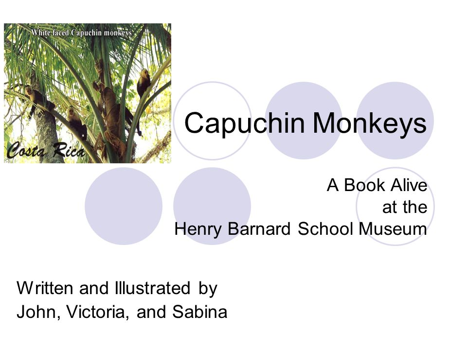 Capuchin Monkeys A Book Alive at the Henry Barnard School Museum