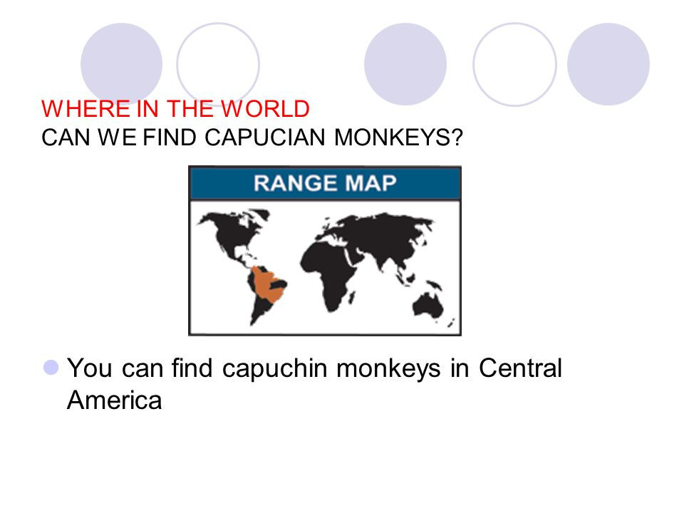 WHERE IN THE WORLD CAN WE FIND CAPUCIAN MONKEYS