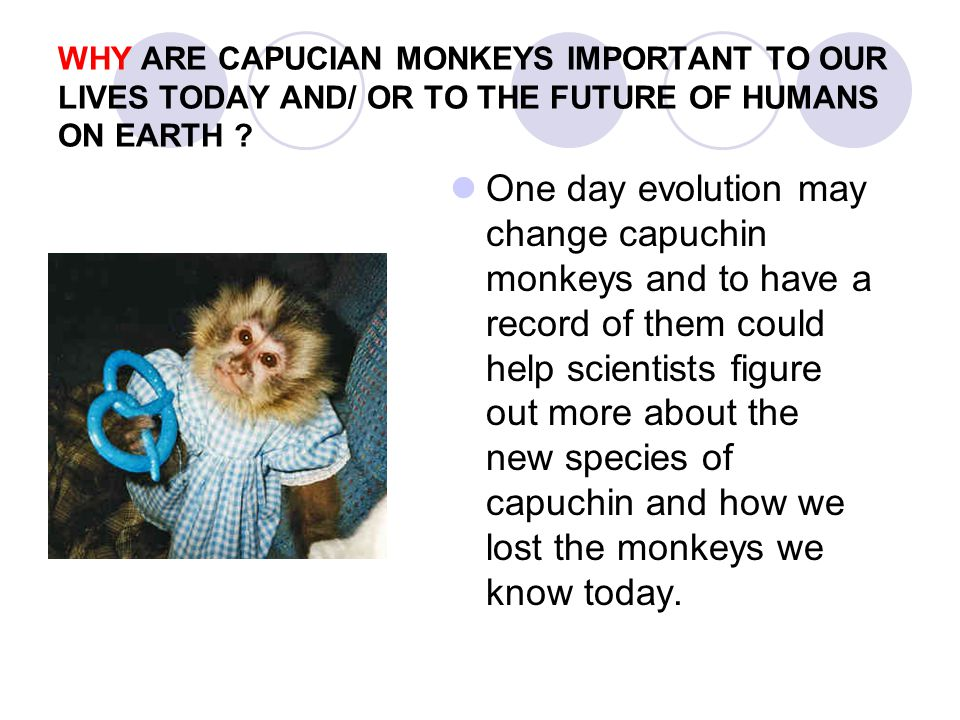 WHY ARE CAPUCIAN MONKEYS IMPORTANT TO OUR LIVES TODAY AND/ OR TO THE FUTURE OF HUMANS ON EARTH