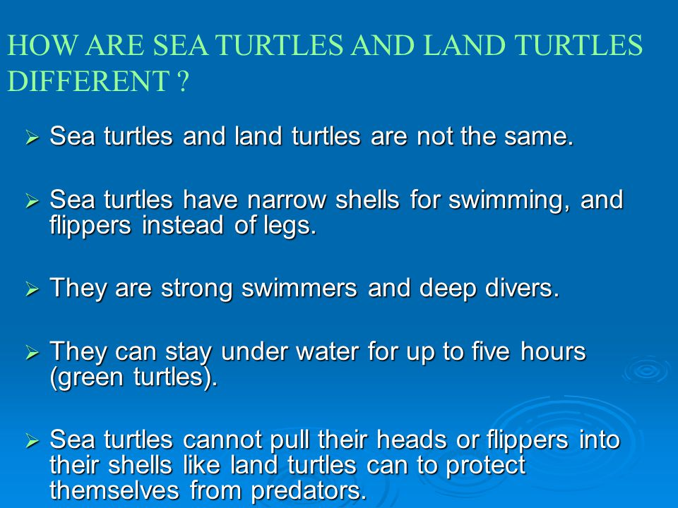 HOW ARE SEA TURTLES AND LAND TURTLES DIFFERENT