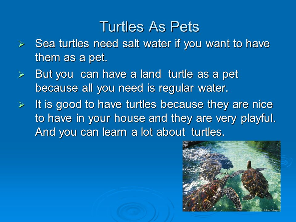Turtles As Pets Sea turtles need salt water if you want to have them as a pet.
