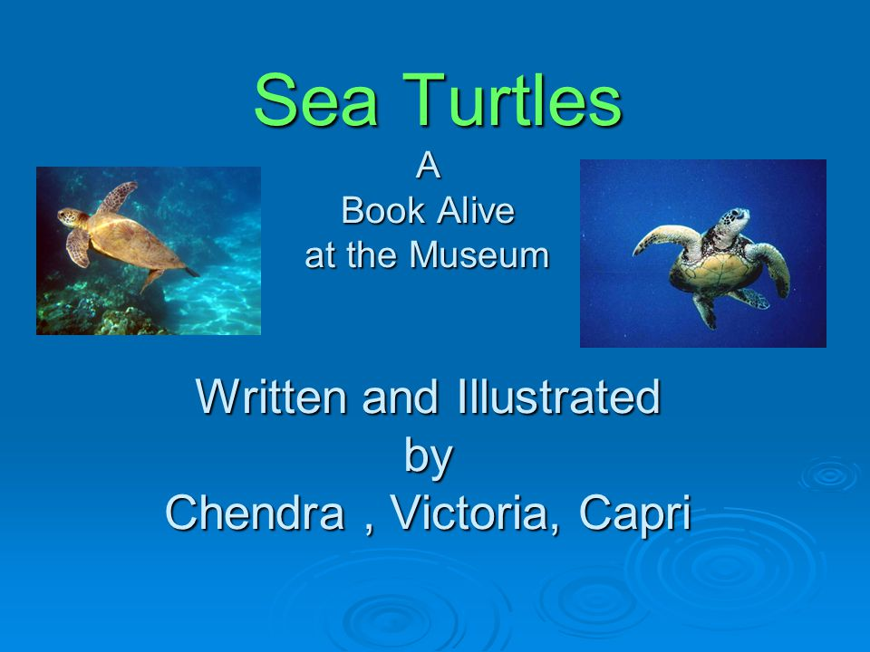 Sea Turtles A Book Alive at the Museum Written and Illustrated by Chendra , Victoria, Capri