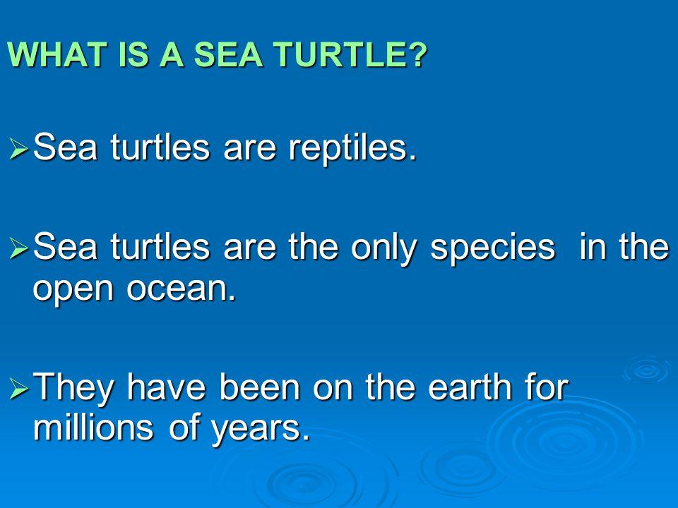 Sea turtles are reptiles.