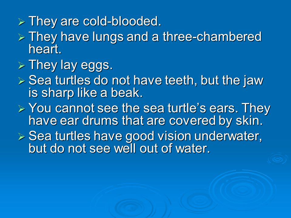 They are cold-blooded. They have lungs and a three-chambered heart. They lay eggs. Sea turtles do not have teeth, but the jaw is sharp like a beak.