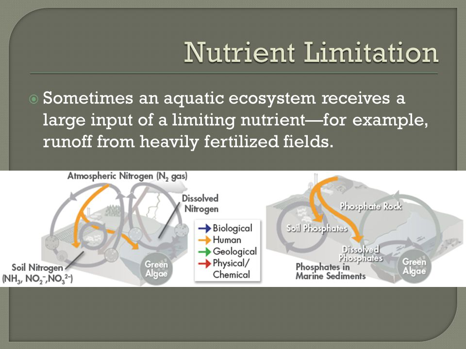 Nutrient Limitation Sometimes an aquatic ecosystem receives a large input of a limiting nutrient—for example, runoff from heavily fertilized fields.