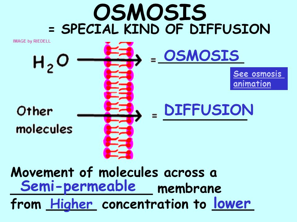 OSMOSIS OSMOSIS DIFFUSION Semi-permeable lower