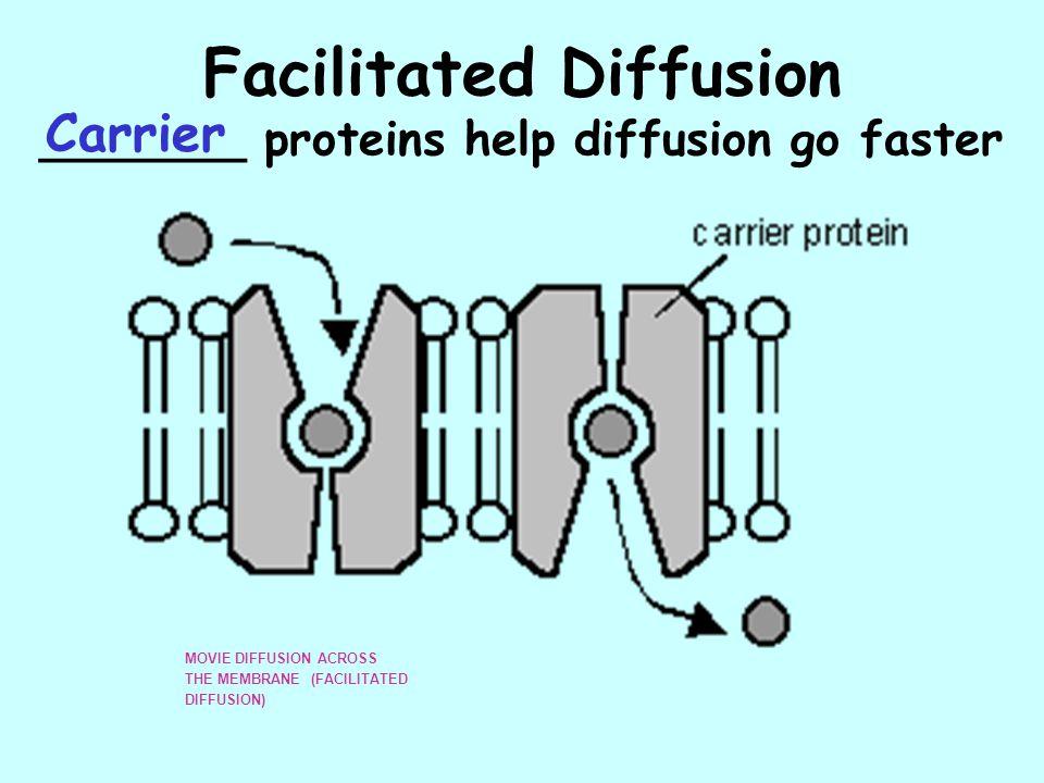 Facilitated Diffusion _______ proteins help diffusion go faster