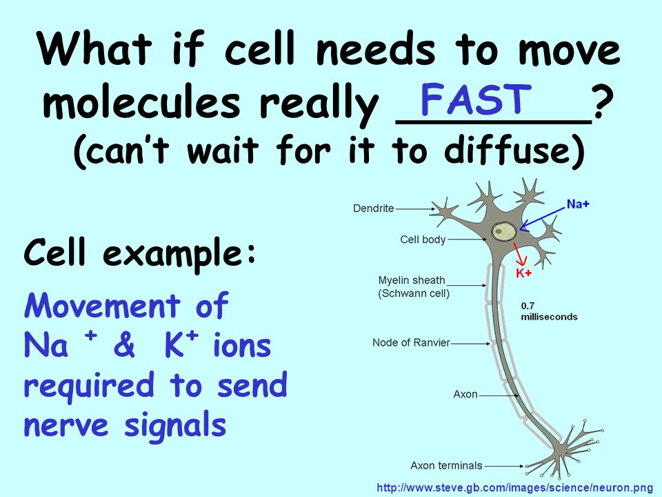 What if cell needs to move molecules really _______