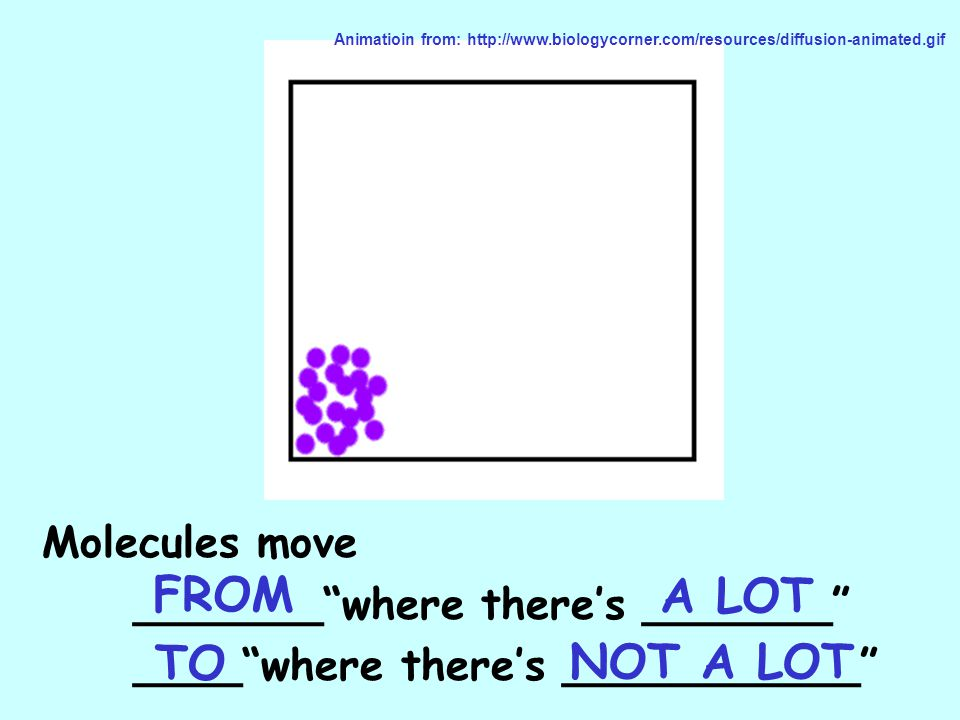 FROM A LOT TO NOT A LOT Molecules move _______ where there's _______