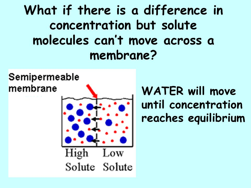 What if there is a difference in concentration but solute molecules can't move across a membrane