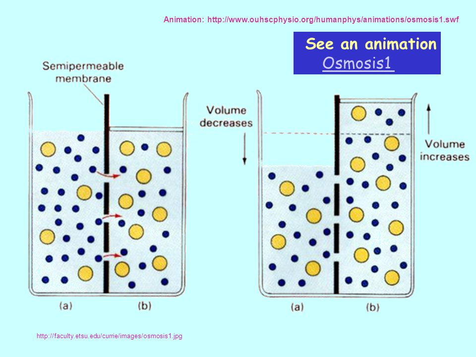 See an animation Osmosis1