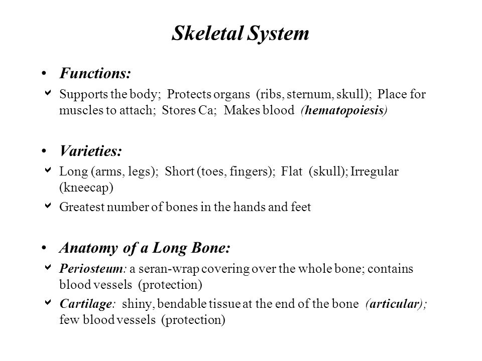 Skeletal System Functions: Varieties: Anatomy of a Long Bone: - ppt ...