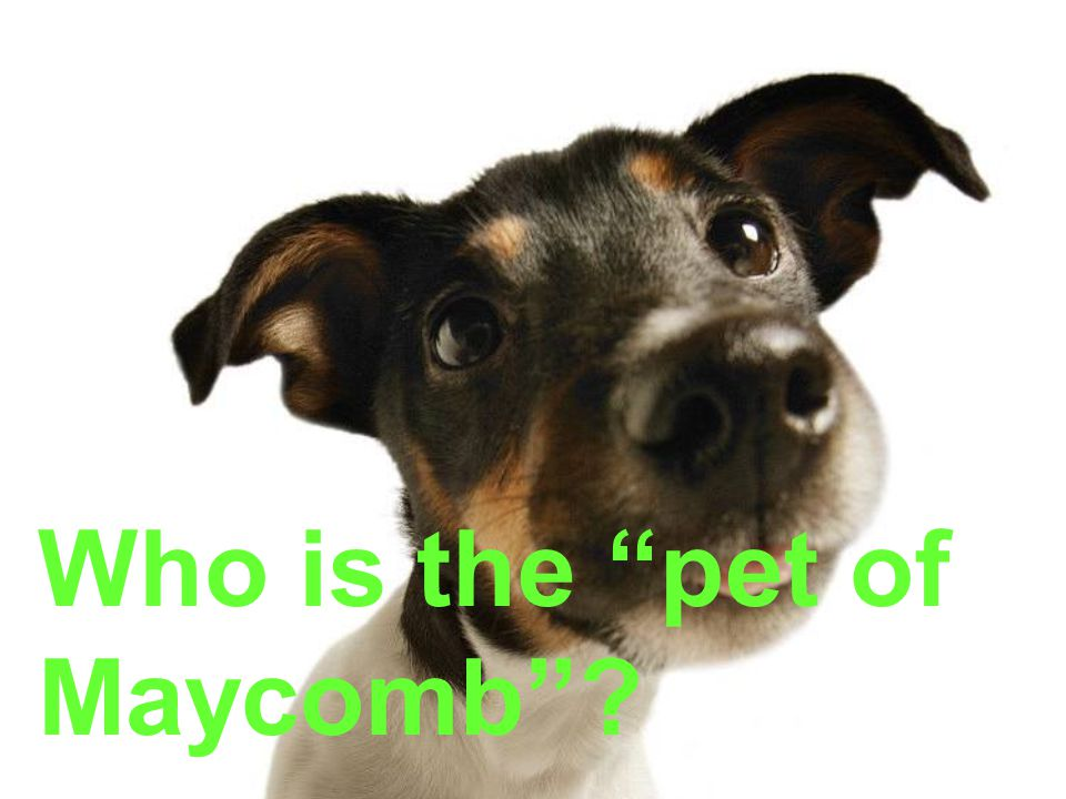 Who is the pet of Maycomb