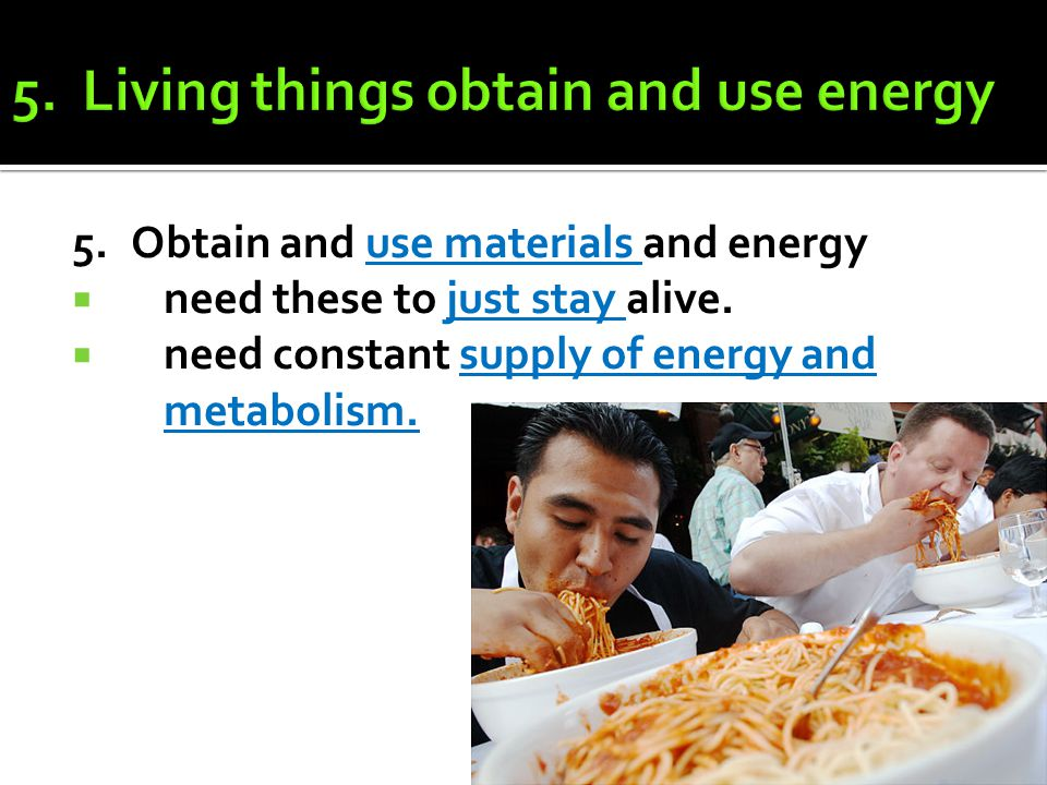 5. Living things obtain and use energy