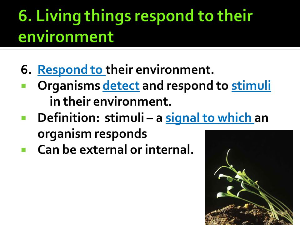6. Living things respond to their environment