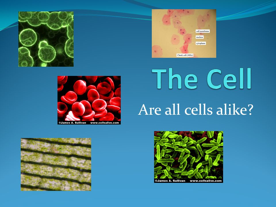 The Cell Are all cells alike