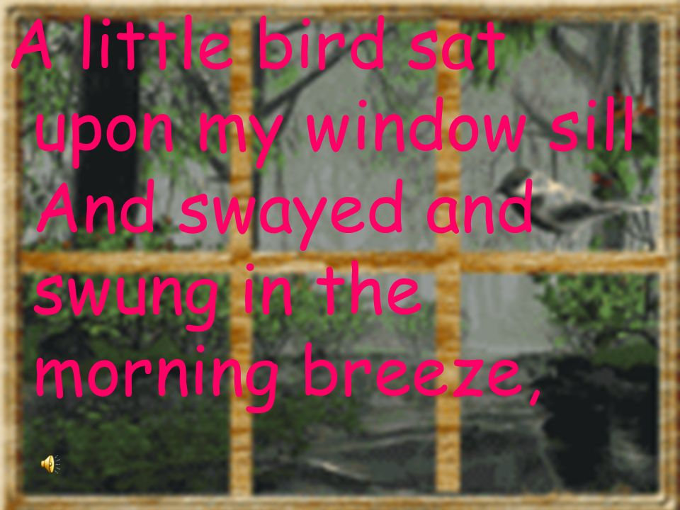 A little bird sat upon my window sill And swayed and swung in the morning breeze,