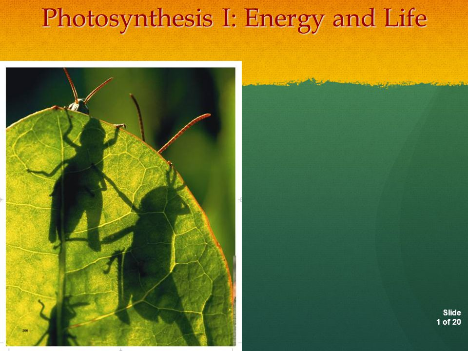 Photosynthesis I: Energy and Life