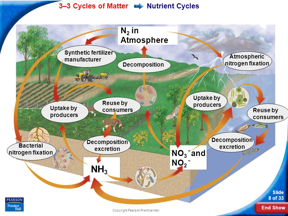 NH3 N2 in Atmosphere NO3 and NO2 Nutrient Cycles