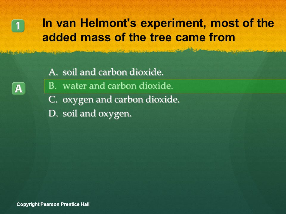 In van Helmont s experiment, most of the added mass of the tree came from