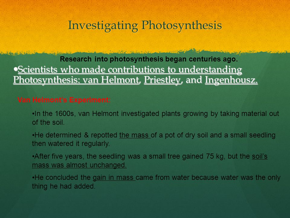Investigating Photosynthesis